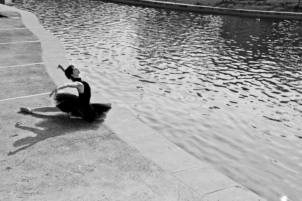 Swan Lake, swan, ballet,